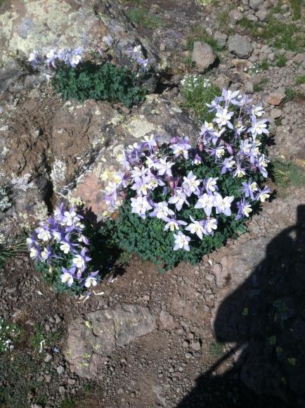 Flowers for Jen